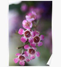 Pink Flowers Macro Poster