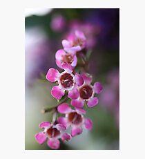 Pink Flowers Macro Photographic Print
