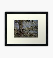 fir tree  Framed Print