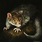 Brushtail possum (Trichosurus vulpecula) by TallabeenaArt