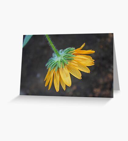 Dangling Daisy Greeting Card