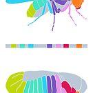 Drosophila Hox Genes  by the vexed  muddler