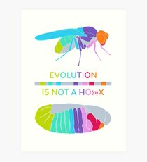Drosophila Hox Genes - Evolution is not a Ho(a)x Art Print