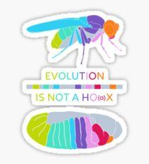 Drosophila Hox Genes - Evolution is not a Ho(a)x Glossy Sticker