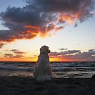 Ditte - the sunset dog by Trine