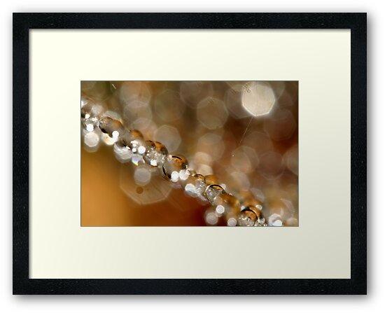 Web & Sparkles by Sharon Johnstone