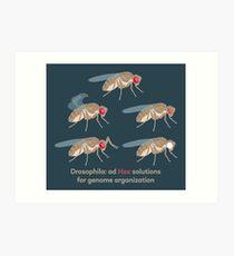 Drosophila Mutations: Ad Hox Solutions for Genome Organization Art Print