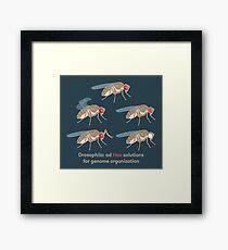 Drosophila Mutations: Ad Hox Solutions for Genome Organization Framed Print