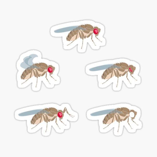 Drosophila Mutations: Ad Hox Solutions for Genome Organization Sticker
