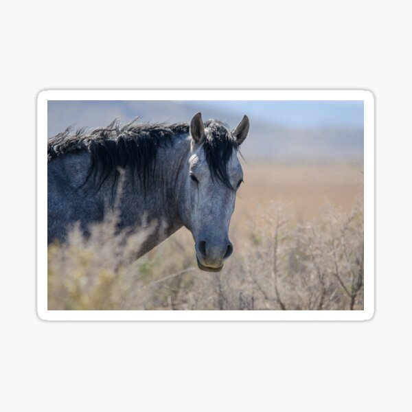 I told you, I can see you … Wild Mustang Mare Sticker