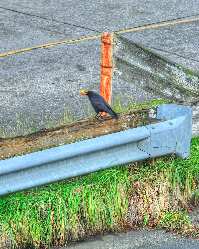 Eating Crow by lincolngraham