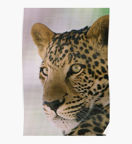 Leopard & majestic Poster