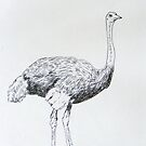 ostrich by jovica