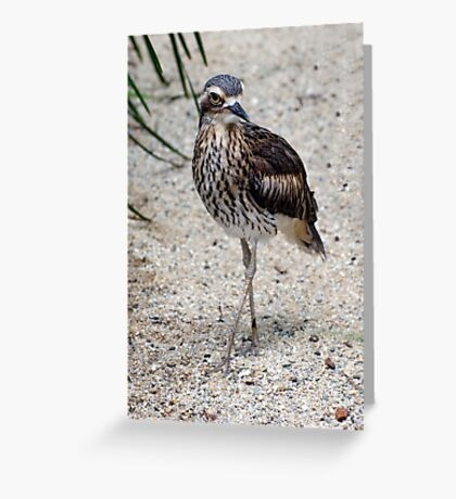 Cross your Legs -  curlew in Cairns Greeting Card