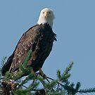 Eagle Eyes by David Friederich