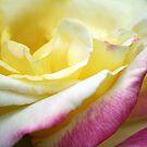 Pink Lemonade by margieacosta