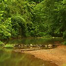 Stream on Brakebill Rd. by Susan Blevins