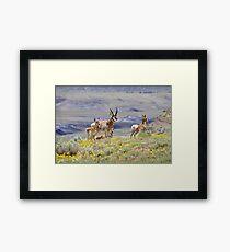 Pronghorn Family Framed Print