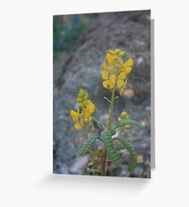 Wildflowers of the Pilbara Greeting Card