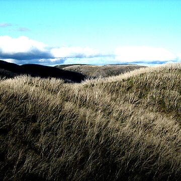 Bogong High Plains,  Victoria's Snow Country by snappypixie