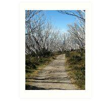 Path to Wallace Hut, Bogong High Plains Art Print