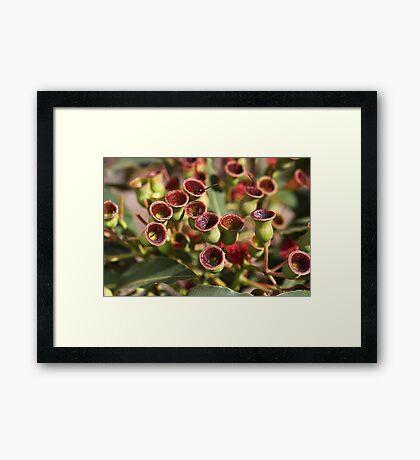 Aussie Gumnut Framed Print