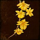 Botanica - Dendrobium Dixanthum Orchid by Sybille Sterk