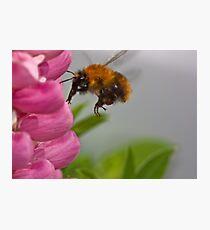 Lupin landing Photographic Print