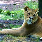 Lion Lady 2 by Janone