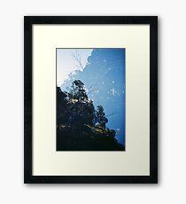 Koala Kingdom Framed Print