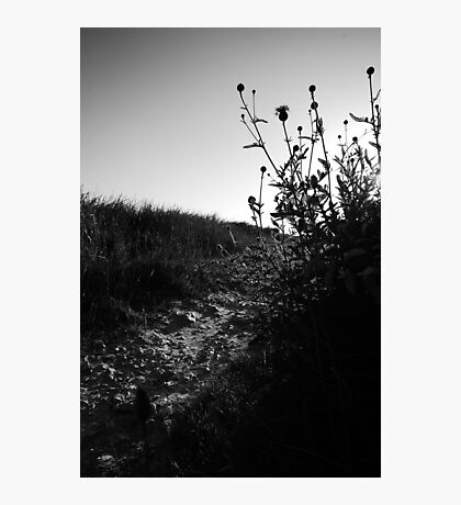 Thistle Guarded Pathway Photographic Print