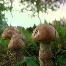 Field Mushrooms by L J Fraser
