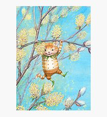 Catkin - cute pussy-willow-pixie Photographic Print