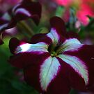 Petuna Reflection by Lozzar Flowers & Art