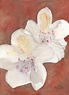 White Rhododendron by Ken Powers
