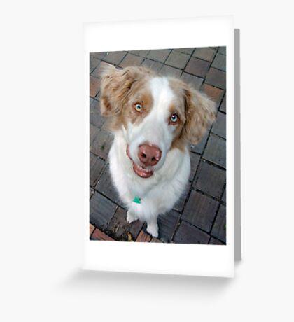 Scooby the Australian Shepherd Poses Greeting Card