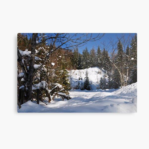 Winter Scene Metal Print