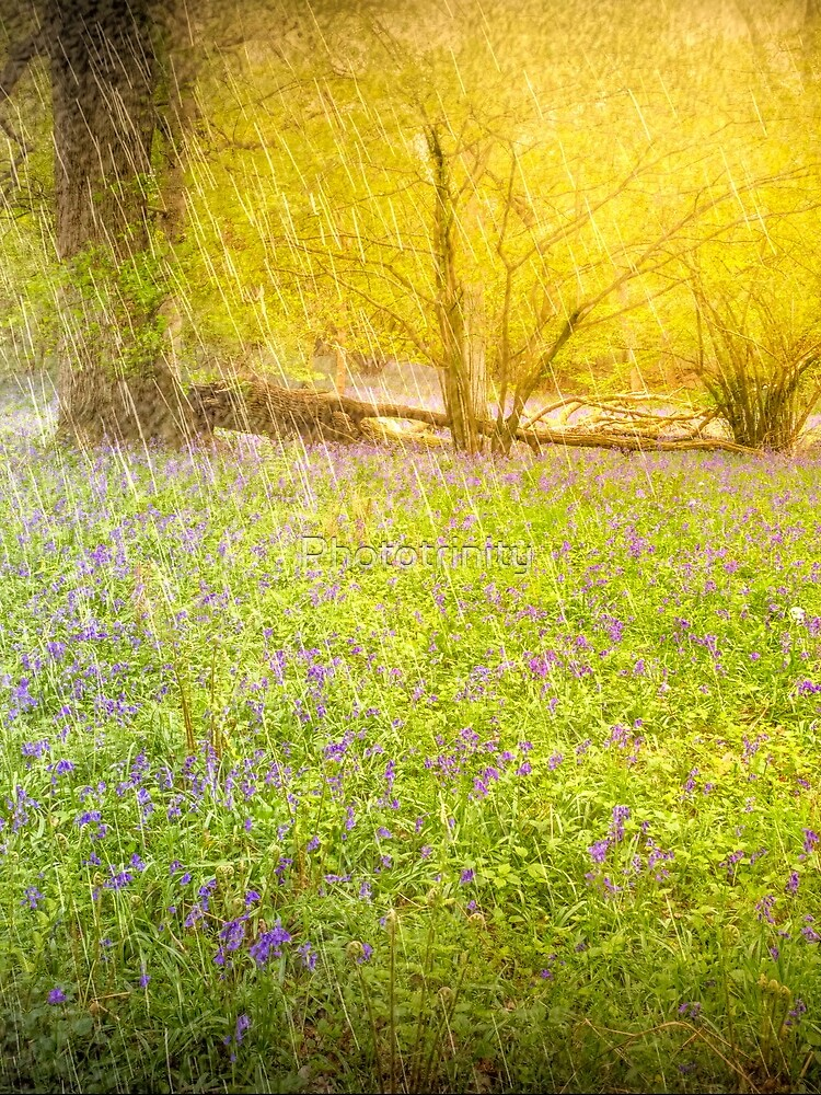 April Springtime Shower in the Ancient Woodland of Bluebells by Phototrinity