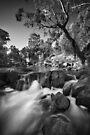 Swimming Upstream by Jim Worrall