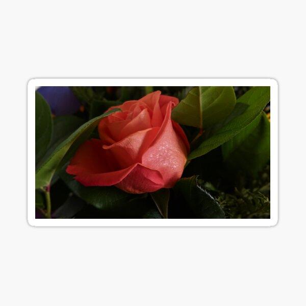 Peach Rose Sticker