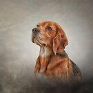 Zeichnungshund Beagle von bonidog
