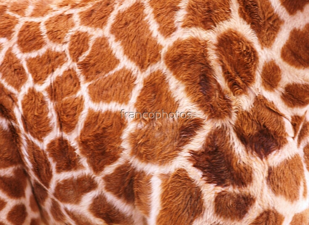 Baby Giraffe Design by Franco De Luca Calce