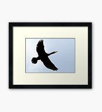 Flight Of The Cormorant Framed Print