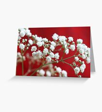 Gypsophila Greeting Card