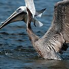 Brown Pelican and company by Bonnie T.  Barry
