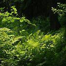 Magic fern by Bluesrose