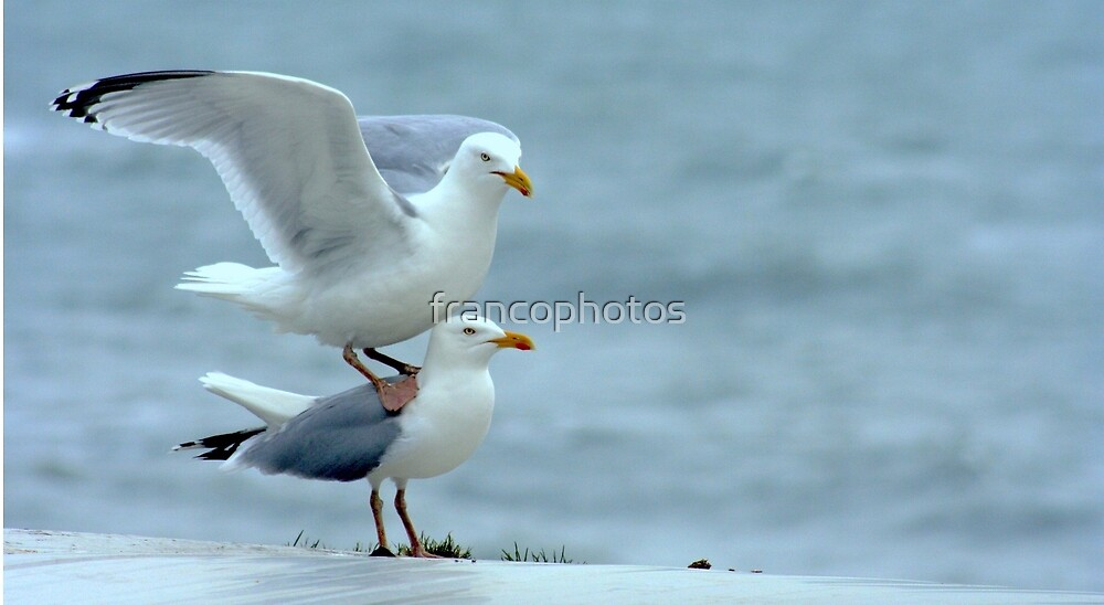 My Feet Are Cold! by Franco De Luca Calce