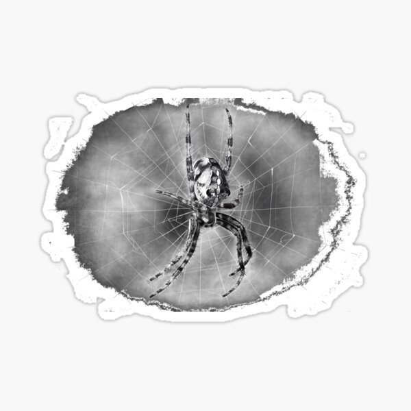 Spinne Sticker