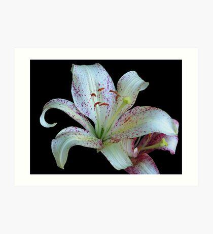Pretty White Lily © Art Print