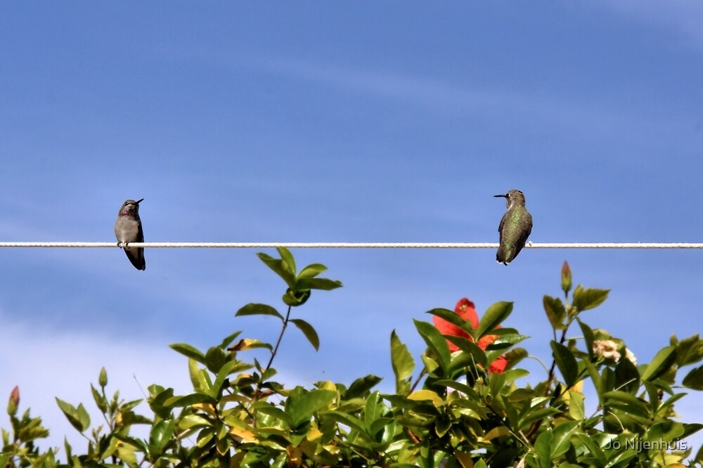 Two Hummies on a Wire by Jo Nijenhuis